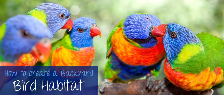 Bird watching is a rewarding pastime that can bring immense pleasure by connecting people with nature. In this article we cover: Benefits of a Bird Habitat, Planning a Bird Habitat, Landscaping considerations, Feeders, Birdhouses & shelter.