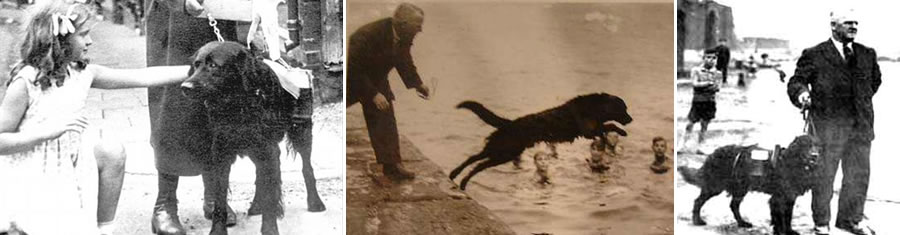 Swansea Jack was a black retriever who was reported to have saved at least 27 people from the most dangerous river in Wales.