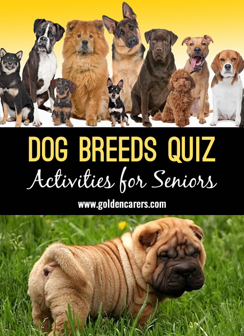 An all about dogs quiz! This is a fun quiz for the elderly in nursing homes and assisted living facilities.