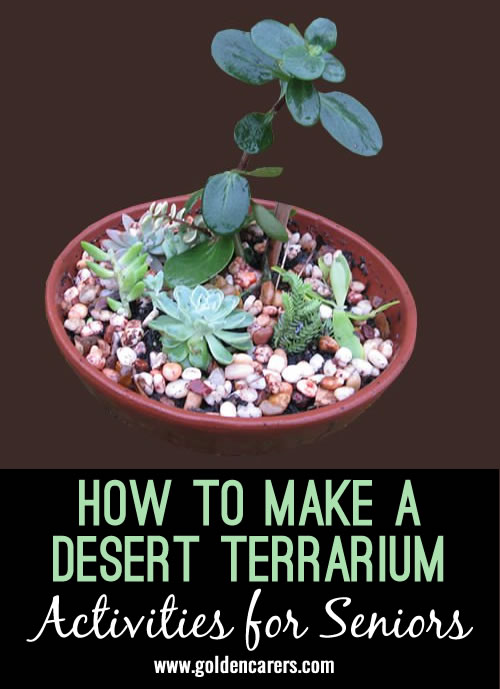 Horticultural activities for seniors using recycled materials. Desert terrariums are fun to make and easy to maintain.