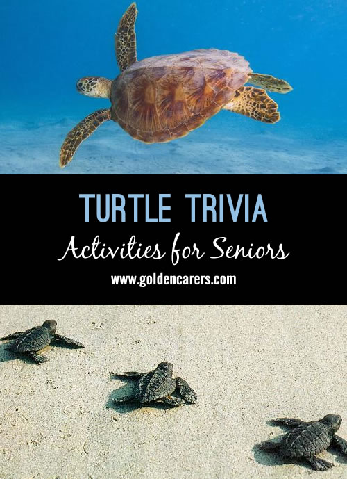 Celebrate World Turtle Day by learning some interesting trivia about turtles!