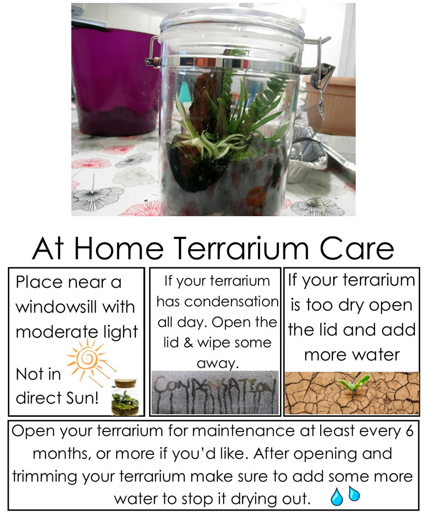 Here is a fun closed terrarium experiment to enjoy with your residents!