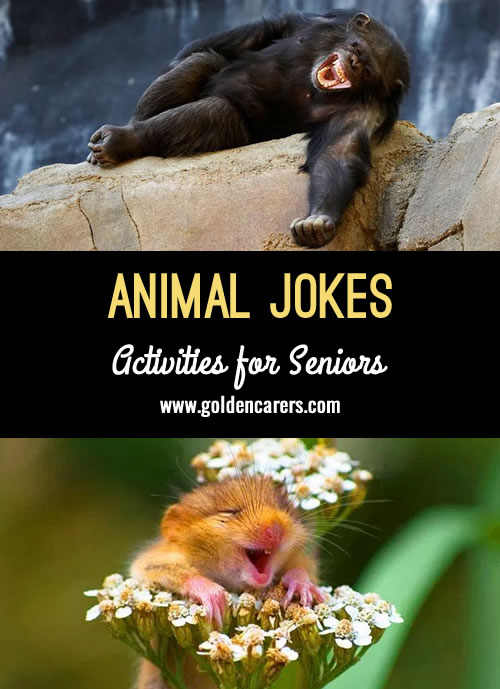 10+ animal jokes to make you laugh! What did mama lion say when she saw her cub chasing a hunter around a tree? Stop playing with your food!