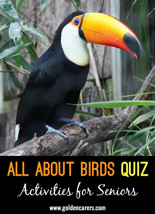 Fun facts about birds for World Animal Day!