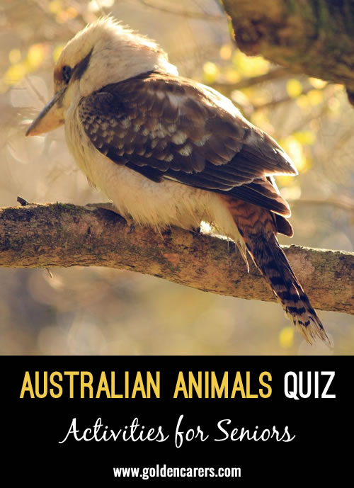 Australia has some unique and amazing animals!  See if you can guess the animals in this quiz...