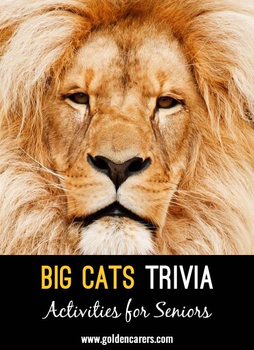 Here are some interesting facts about wild cats to share and discuss.