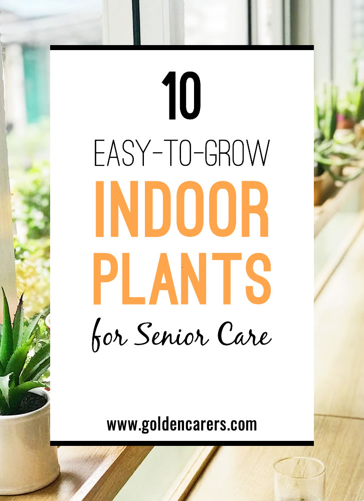 Most people enjoy growing indoor plants. Seniors in long term care facilities should be encouraged to immerse themselves in this wonderful hobby. Dozens of inexpensive plant species can blossom inside small rooms and apartments, so long as they are well cared for.