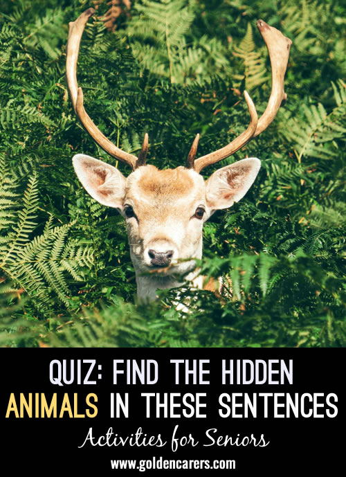 Find the hidden animals in this quiz!