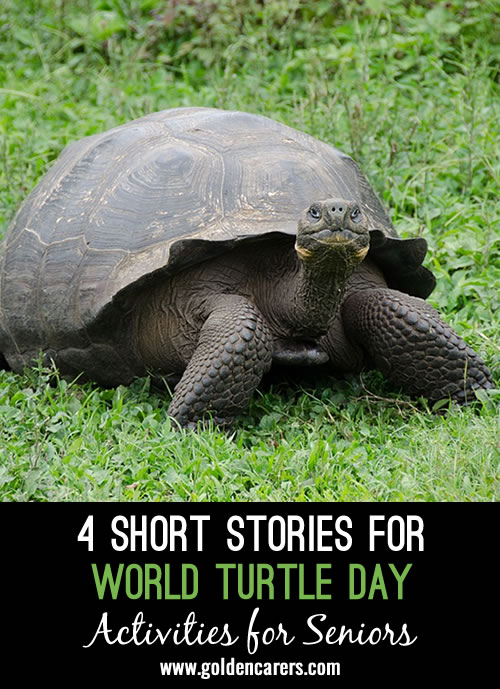 4 lovely short stories about turtles to share!