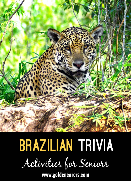 Here are some fascinating facts about Brazil!