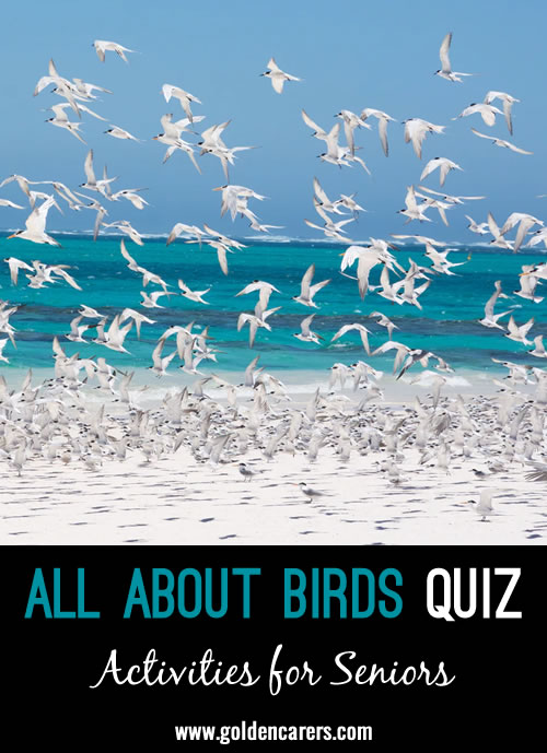 Have fun with this quiz all about BIRDS!