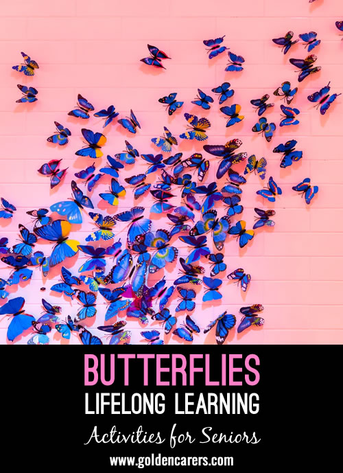 Learn all about the magical world of butterflies!