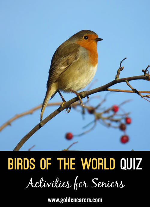 Another fun quiz about birds to share!