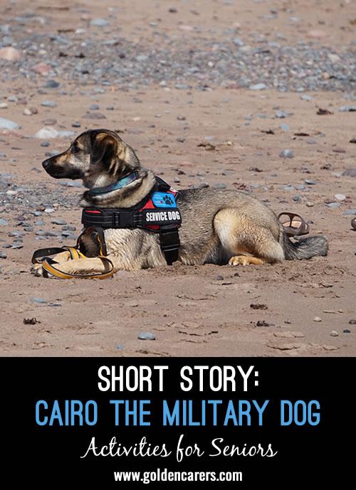Cairo the Military Dog