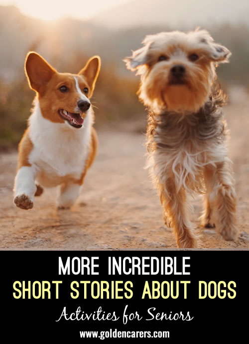 2 More Incredible Dog Stories