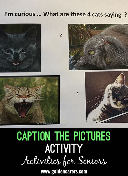 I provided 4 pictures of funny cats and asked residents to give each cat a caption.