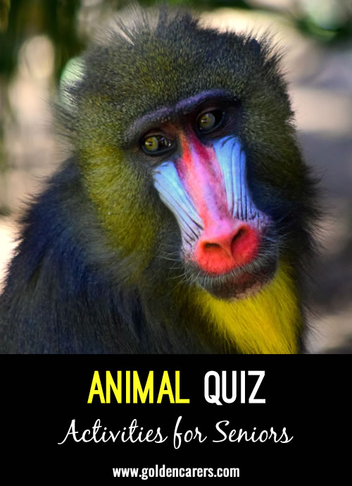 Here's a fun animal-themed quiz to enjoy!