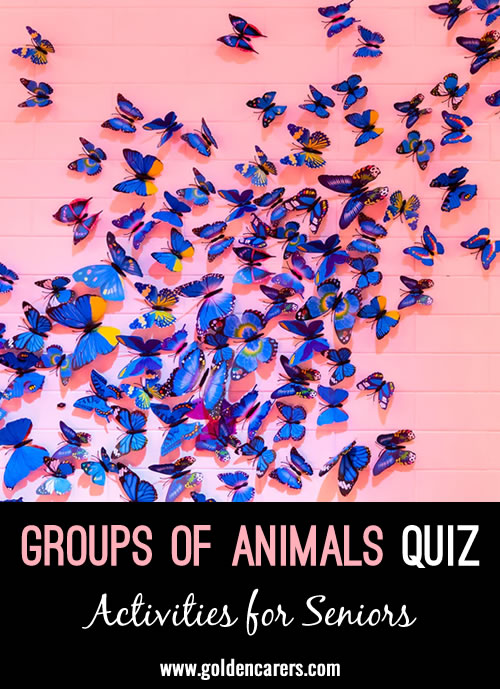 Animal Group Names Quiz