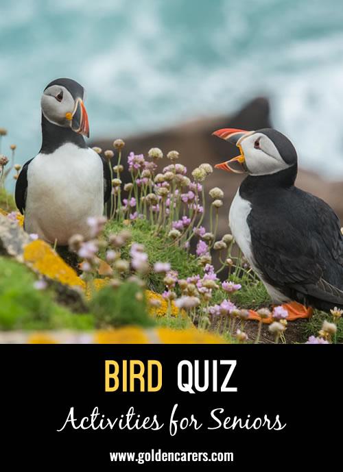 Here's another bird quiz to enjoy!