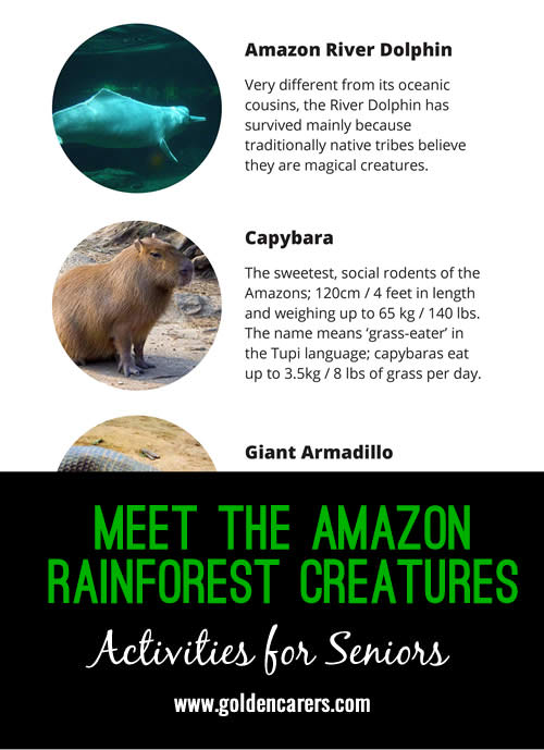 Some fascinating animals live in the Amazon Rainforest - learn more about some of them here!