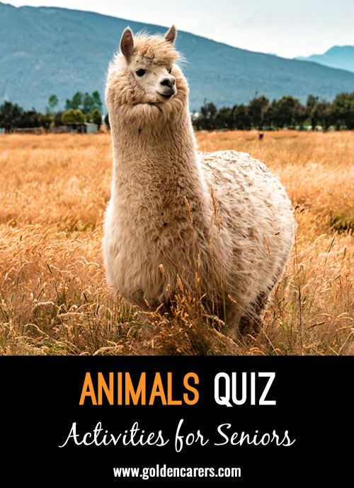 Another visual quiz with some more unusual animals.