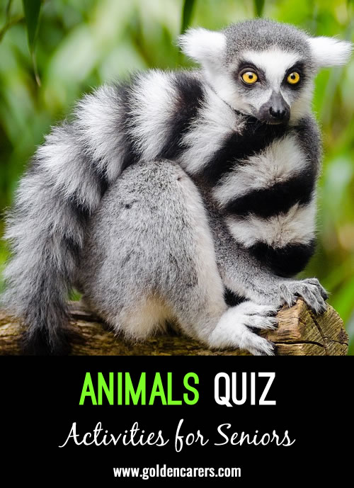 Have fun naming some more unusual animals. A fun quiz for seniors.