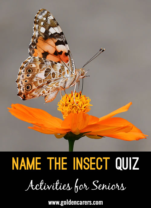 A visual quiz with some common and less common insects.