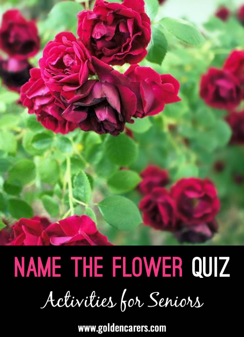 A visual quiz - see if you can name the flowers in these images!
