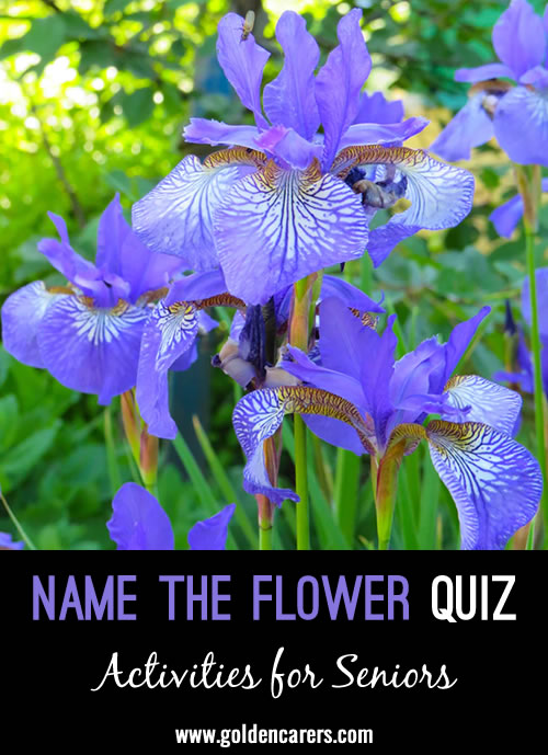 Another visual flower quiz to enjoy!