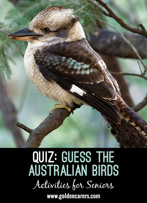 Guess the Australian Birds Quiz