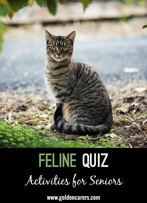 Feline Quiz