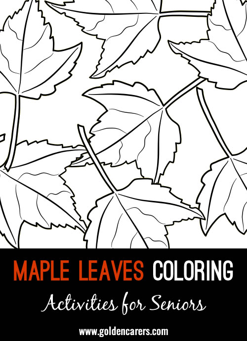 Here are some maple leaves coloring templates to enjoy!