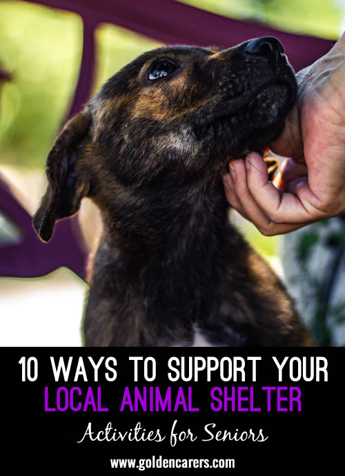 10 Ways to Support Your Local Animal Shelter