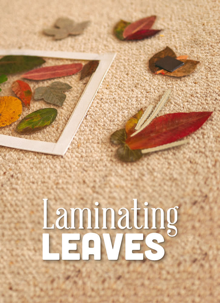 Laminating leaves is a fun activity for any age suitable to any time of the year. Preserved leaves last for months providing eye-catching mobiles, fridge magnets, placemats, gift tags, and more.
