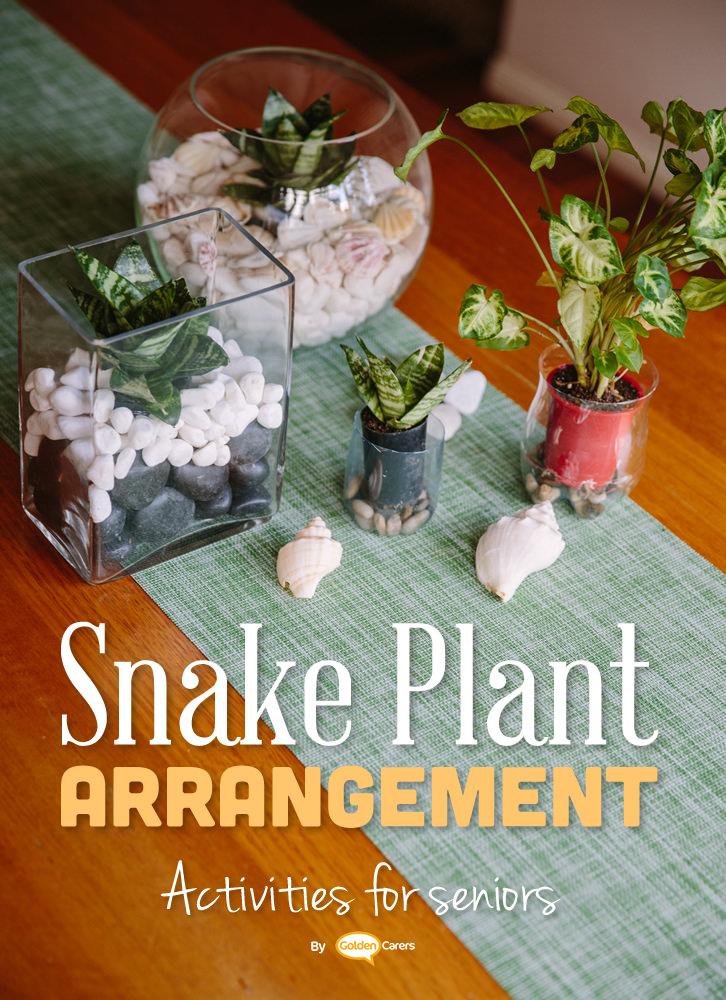 Gift Idea: Plant Arrangement