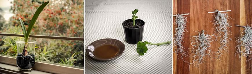 How to start a garden club for seniors for Indoor gardening for seniors