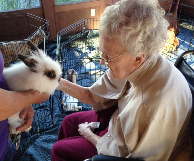 Pet Therapy in Nursing Homes