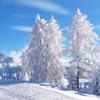 Snow & Winter Quiz