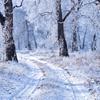 Winter Reminiscing