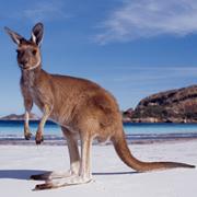 Australia Day (Jan 2020 23rd)