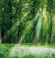 International Day of Forests (Mar 2021 21st)