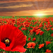 Anzac Day (Apr 2021 25th)