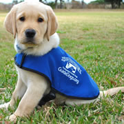International Guide Dog Day (Apr 2020 24th)