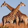 World Animal Day Crossword