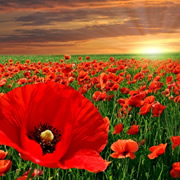 Remembrance Day (Nov 2018 11th)