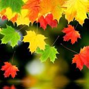 Autumn (Southern Hemisphere)