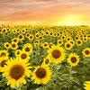 Flowers Quiz