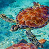 Amazing Facts about Sea Turtles