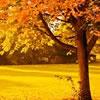 6 Ideas for Celebrating Autumn