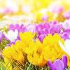 Scrambled Springtime